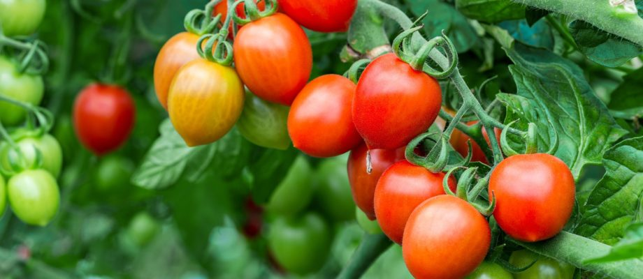 How to Grow Vegetables at Home More Effectively