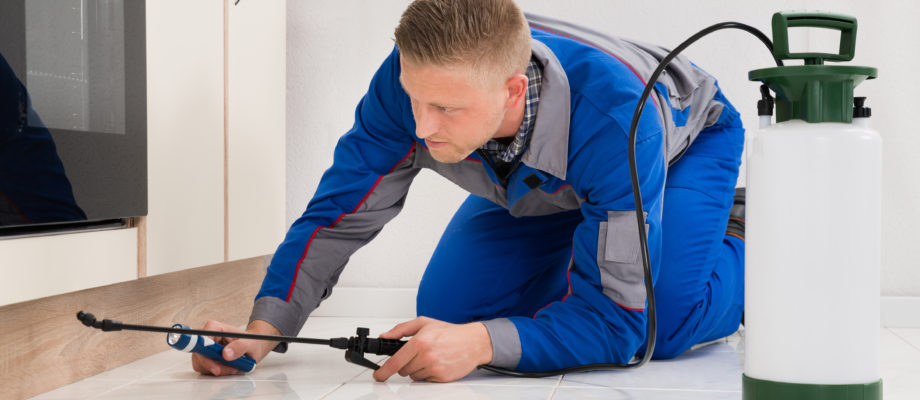 4 Things You Should Know About Pest Control