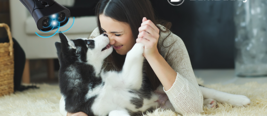2021 Review: Why BarxBuddy Is My Favorite At-Home Dog Training Device