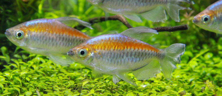 Pet Fish for Beginners: 7 Types to Consider